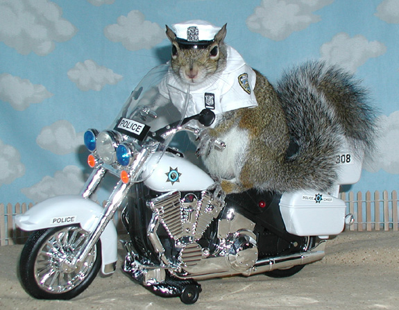 squirrel_on_motorcycle